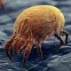Dermatophagoides Pteronyssinus - Dust Mite